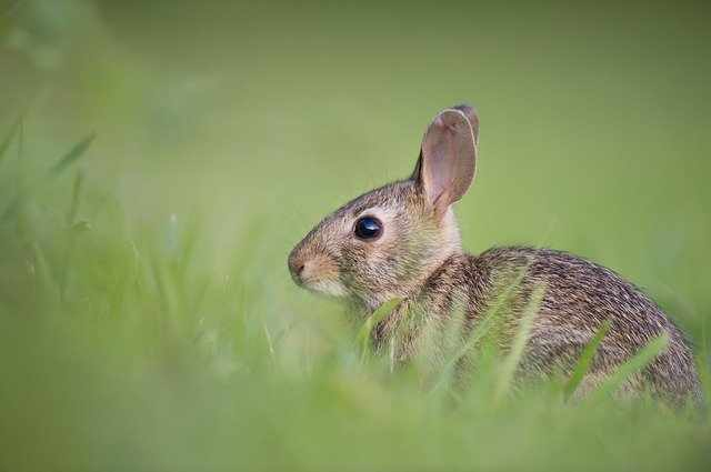 дивите зайци